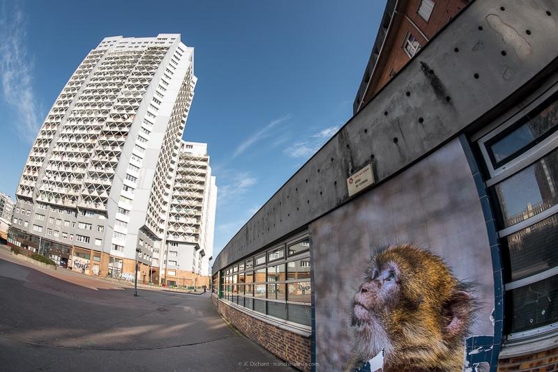 La dalle Robespierre à Vitry sur Seine surveillée par le singe de Bruce Serougne