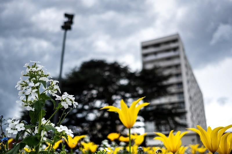 Les massifs de fleurs au centre-ville de Vitry sur Seine