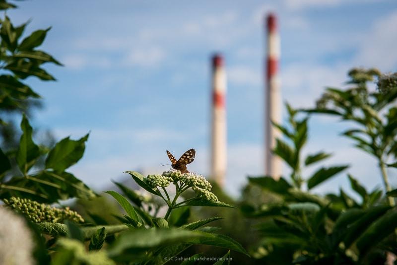 28/52 - Quand la nature reprend sa place, sous le regard attentif des cheminées de la centrale EDF de Vitry sur Seine