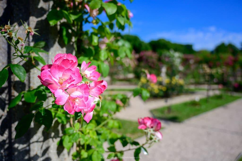 Roseraie du Val de Marne, un Instameet