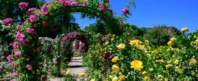 Roseraie du Val de Marne, un Instameet, des fleurs, des photos